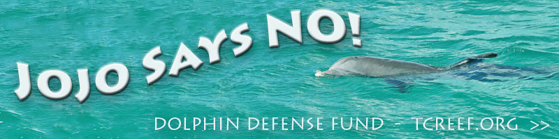 jojo says no dolphinariums in turks and caicos islands