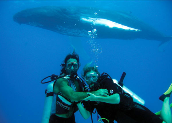 A photograph of SCUBA diver with a Humpback Whale off Providenciales (Provo), Turks and Caicos Islands, British West Indies