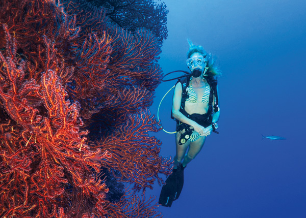 A photograph of a Diver with Gorgonians in the Turks and Caicos Islands.