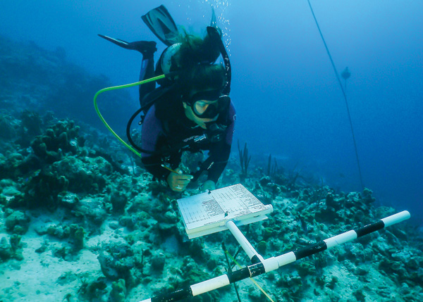 A photograph of Underwater research at South Caicos in the Turks and Caicos Islands.