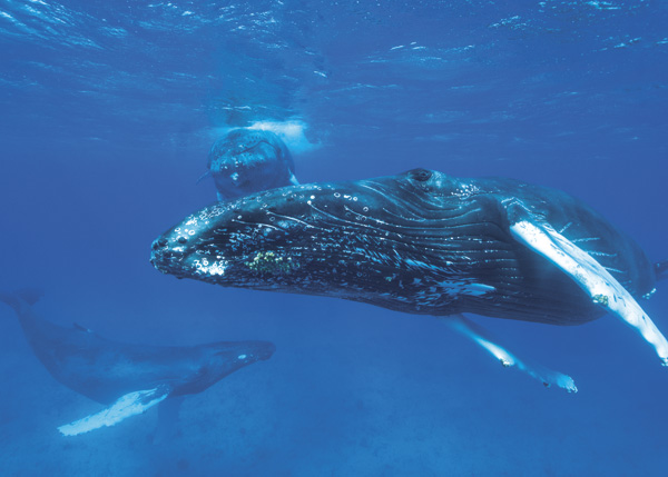 A photograph of Whale Watching in the Turks and Caicos Islands.