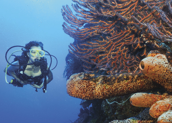 A photograph of diving the wall, West Caicos Turks and Caicos Islands.