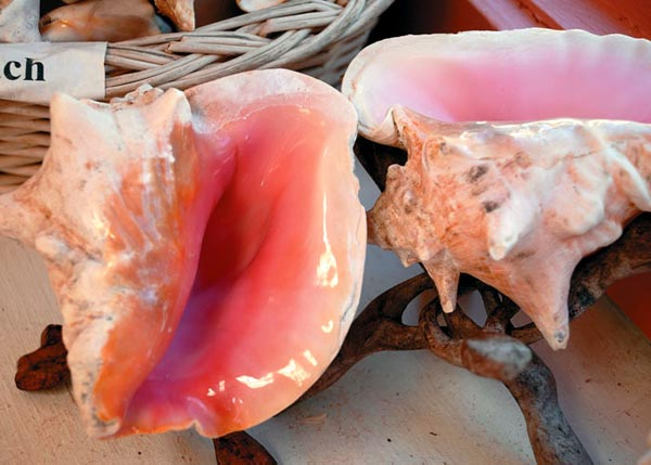 A photograph of Conch shell souvenirs of the Turks and Caicos Islands, British West Indies