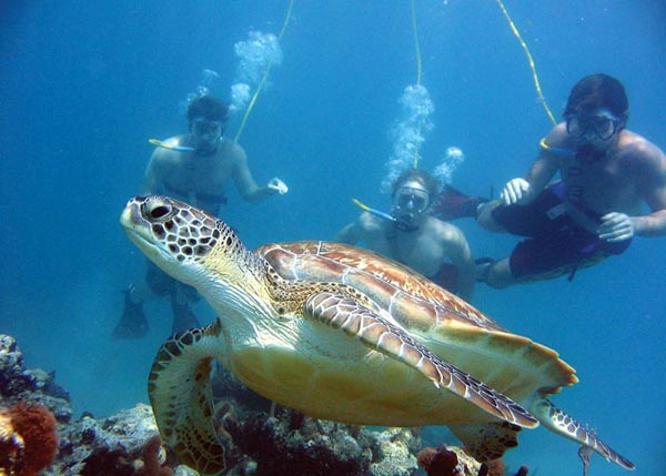 A photograph of a turtle on the reef, Providenciales (Provo), Turks and Caicos Islands